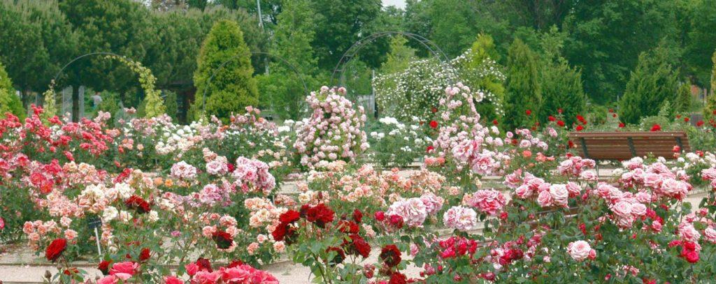 Rosaleda del Jardín Botánico de Alcalá de Henares