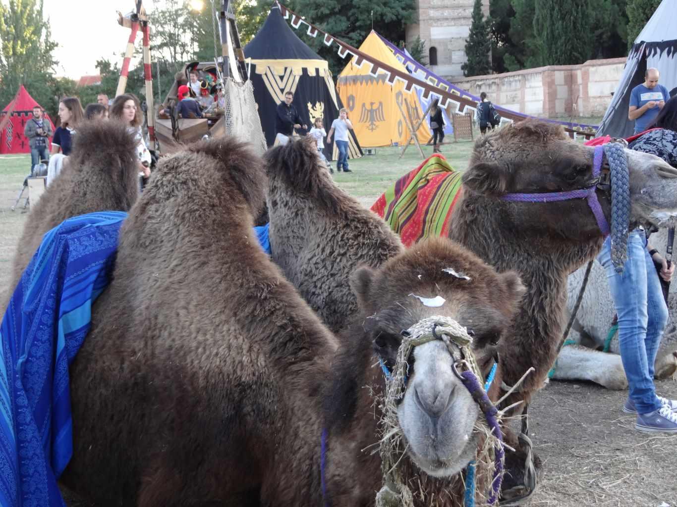 Mercado Medieval 2015 Día 1 (136)