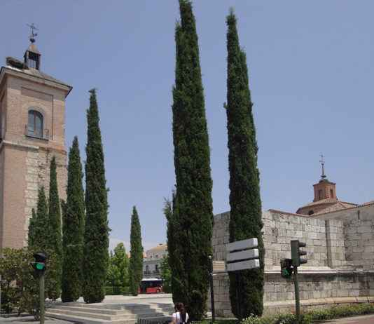 Torre de Santa María - Iglesia de Santa María - Alcalá de Henares