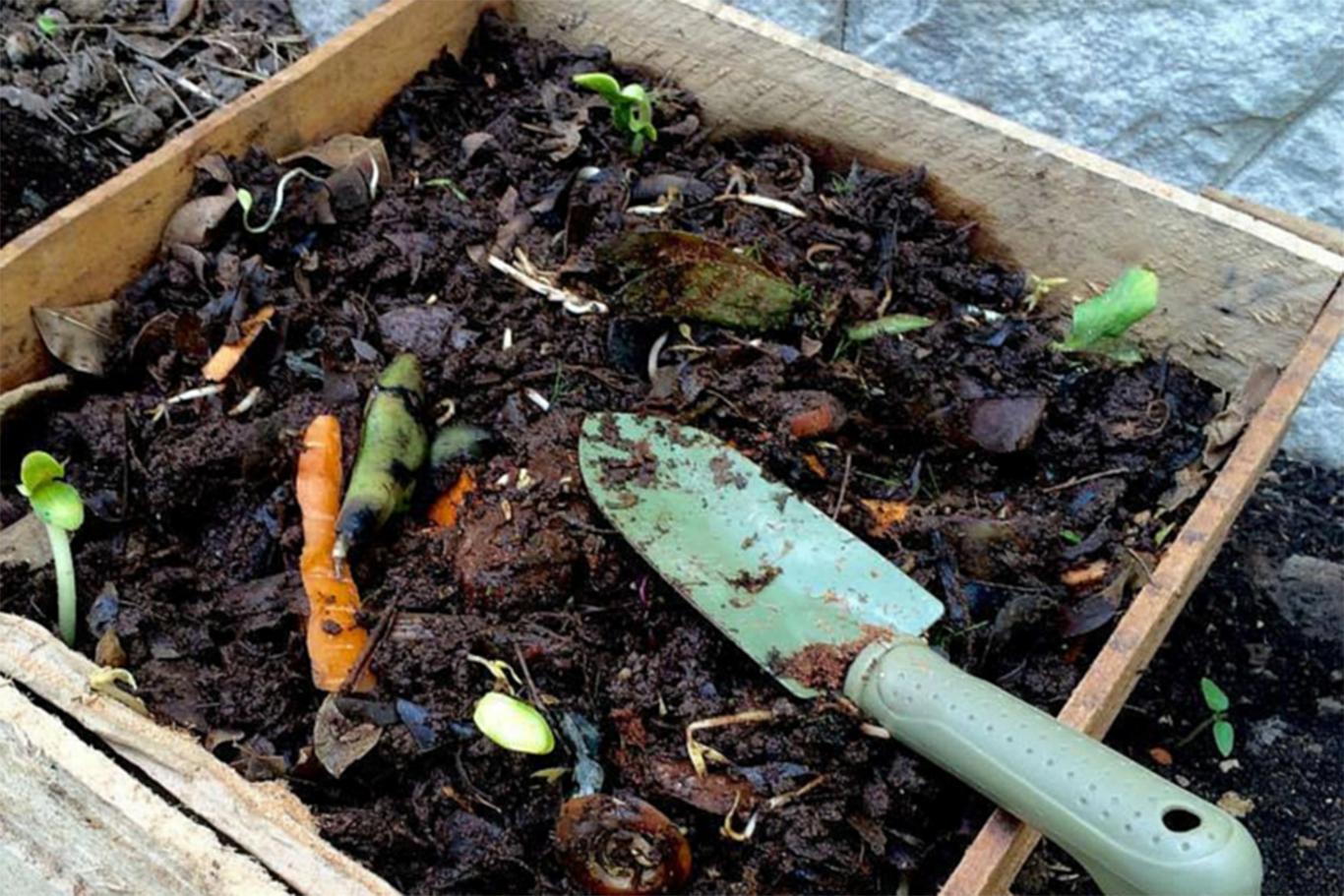 compostar_tierra_planta1